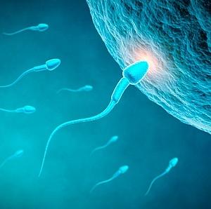 møde af sædceller og ægcelle